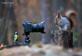 Vadim Trunov is a wildlife photographer who uses high-speed lenses to capture animals that are often difficult to accurate capture, struck gold when he found these curious little guys.