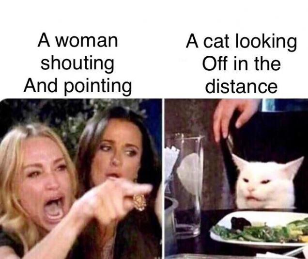 66 of the Absolute Best 'Woman Yelling at a Cat' Memes ...