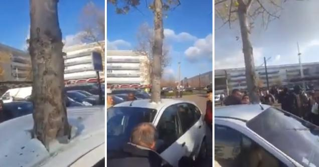 Rooted Tree Growing Through Car Roof Baffles Locals