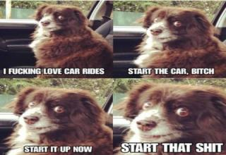 dog car ride meme - I Fucking Love Car Rides Start The Car, Bitch Start It Up Now Start That Shit