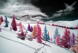 Infrared photography is beautiful.