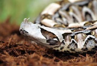 World's Deadliest Snakes Pt  1 - Gallery   eBaum's World
