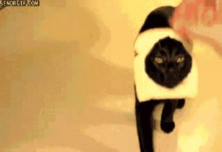 The internet's series of tubes transporting cats for your enjoyment