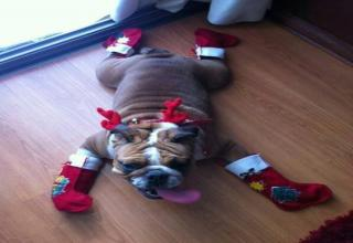 Happy Holidays Too All!