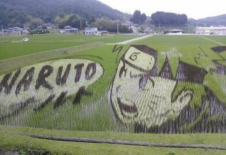 Since 1993, the farmers of the Japanese village of Inakadate, in Aomori Prefecture, has been creating elaborate designs on rice paddy fields by intermixing a variety of rice strains to create large scale artworks. Each year these farmers plant rice of different color to create new artworks and they last all through the growing season until harvest
