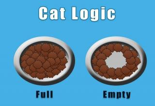 As a cat owner, I can confirm that all of these are true.