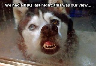 Funny and interesting pictures with captions.