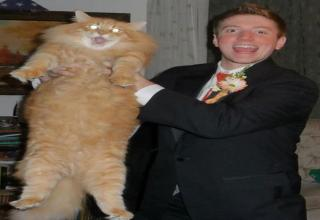Funny and creative prom photos.