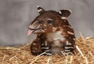 The Best Baby Animal Photos of 2013