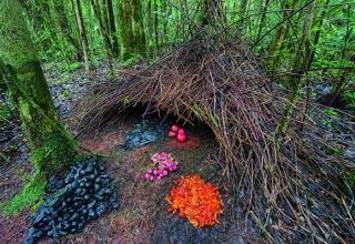 Beautiful Homes Built By Animals