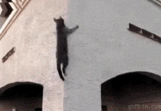 Are cats secretly ninjas? You be the judge.