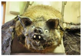 Check out this gallery of some of the worst taxidermy fails ever seen.