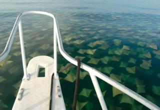 20 Pictures That Prove You Definitely Have Thalassophobia (Fear Of The Sea)