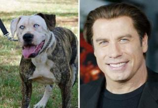 12 Funny Striking Resemblances Between Celebrities And Animals