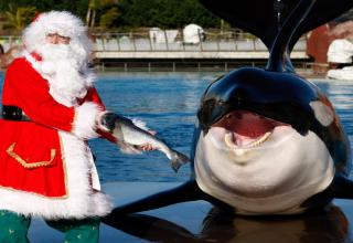 Animals celebrating Christmas, some naughty but for others mostly nice...