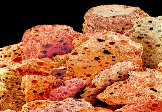 Scanning electron micrographs of foods.