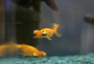 fish that don't look like your average house hold pet...