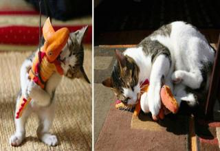 Here are 20 pics of cats and dogs with their favorite toys from their puppy/kitty years.