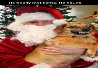 If you think being a mall santa would suck, pity the poor pet photo santas!!!