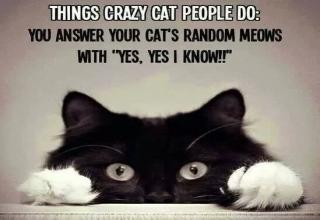 Feline funnies that will get you laughing