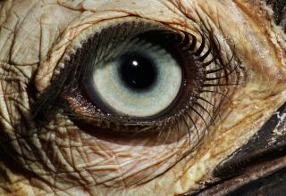 36 remarkable images of assorted eyes for your enjoyment