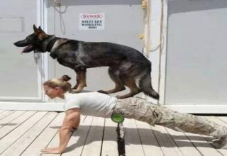 Dogs are truly a man's best friend. Incredibly loyal, keenly astute and aware of changes in our demeanor, and even health. They are there at the best and worst times, and many of the funny ones. And in the spirit of your favorite family member, here's even more hilarious <a href=https://cheezburger.com/5408517/19-wholesome-dog-memes-that-are-too-pure>wholesome hounds</a> to start your day off right. Looking to get a serious case of the warm and fuzzies? These <a href=https://cheezburger.com/3685893/30-doggo-memes-that-will-leave-you-feeling-warm-and-fuzzy>adorable puppers</a> are guaranteed to have you feeling rejuvinated. Or check out some of our favorite furry helpers that go above and beyond the status of pet, and are an inseparable part of some peoples lives as <a href=https://www.ebaumsworld.com/pictures/36-service-dog-memes-that-want-to-be-your-best-friend/85601602/>service doggos</a>.