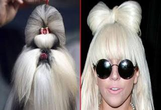Ive scoured the web and found some canines that look like your favorite celebrities from your favorite tabloids.