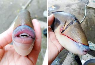 Roman Fedortsov, a sailor from Murmansk, shared a picture of a strange fish and asked his followers what it's called. It turned out to be a triggerfish.