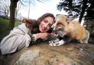 Meet Todd, the fox dog.